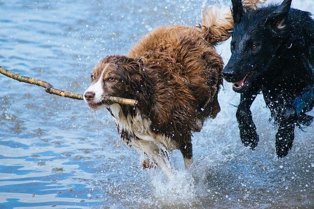 zábava psů